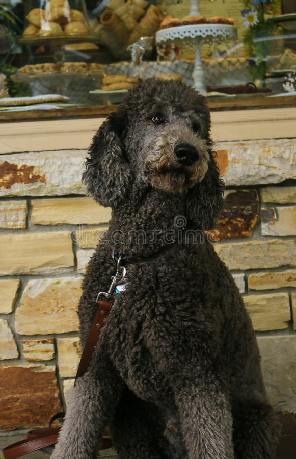 O cão dos padeiros imagens de stock royalty free