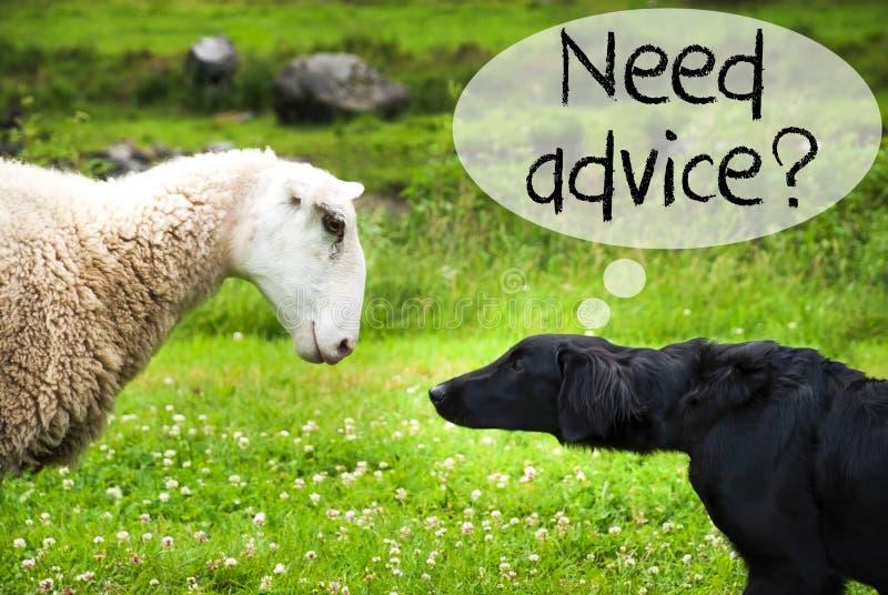 O cão encontra carneiros, conselho inglês da necessidade do texto imagens de stock