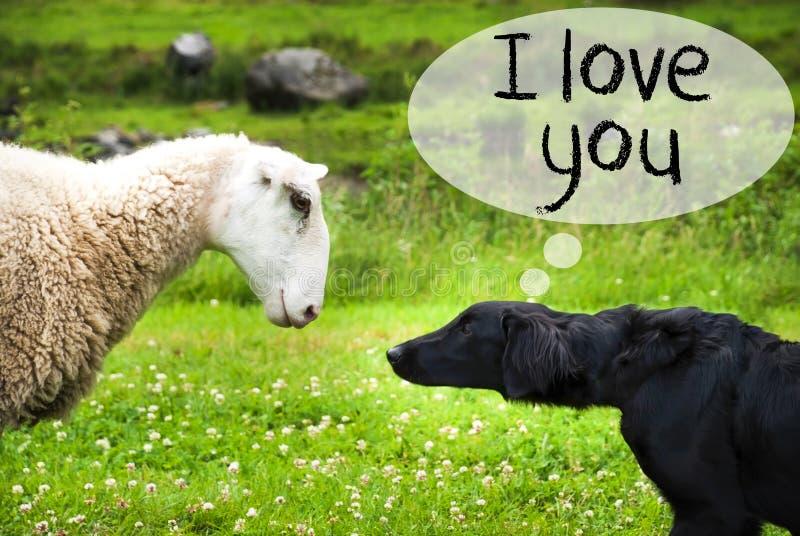 O cão encontra carneiros, texto eu te amo imagens de stock
