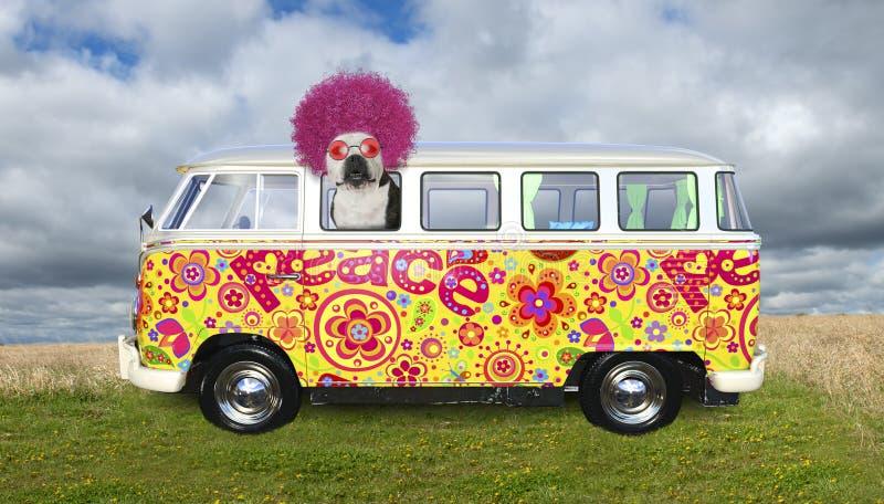O cão engraçado da hippie, VW transporta foto de stock royalty free