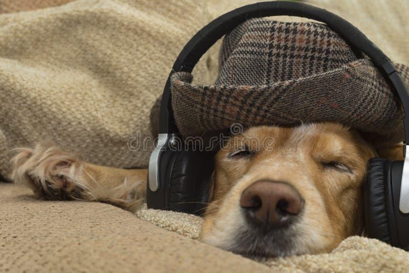 O cão escuta a música no telefone celular ao encontrar-se no sofá imagem de stock royalty free