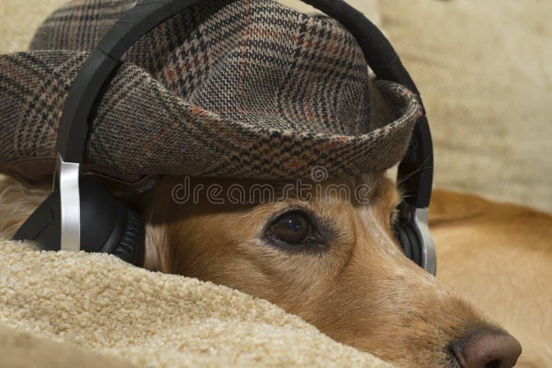 O cão escuta a música no telefone celular ao encontrar-se no sofá fotografia de stock royalty free