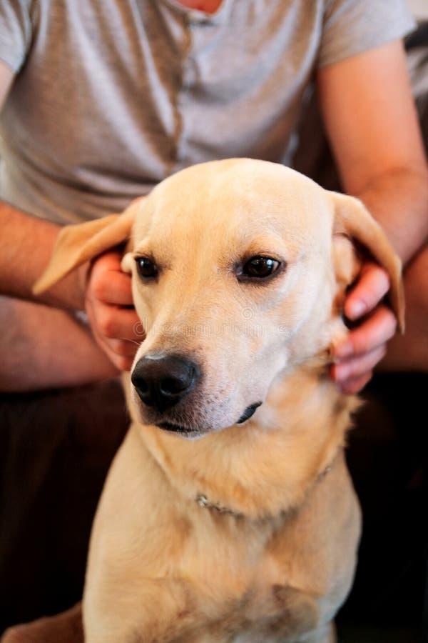 O cão está descansando para trocas de carícias do proprietário do homem e está riscando seu animal de estimação imagem de stock royalty free