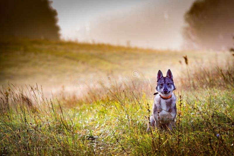 O cão está na caça imagem de stock royalty free