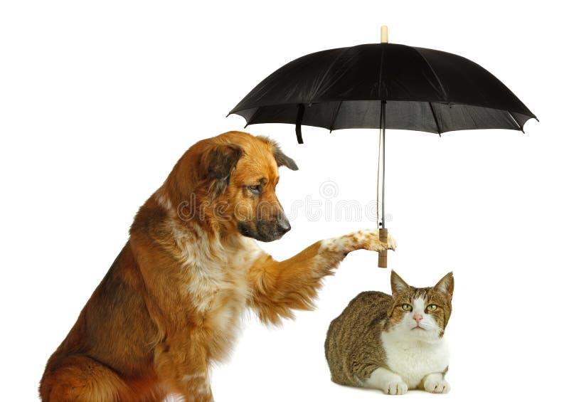 O cão está protegendo um gato com um guarda-chuva fotos de stock
