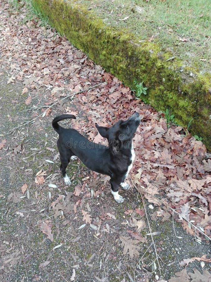 O cão fundado fotografia de stock