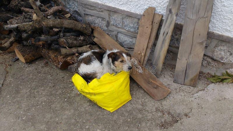 O cão gosta de dormir em um saco foto de stock
