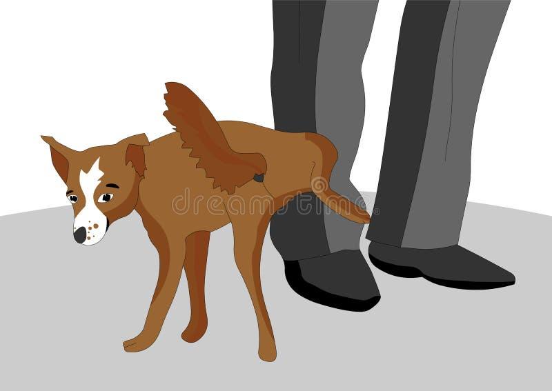 O cão impudente e desobediente decidiu fazer xixi no pé do proprietário, ela tem um olhar malicioso ilustração stock