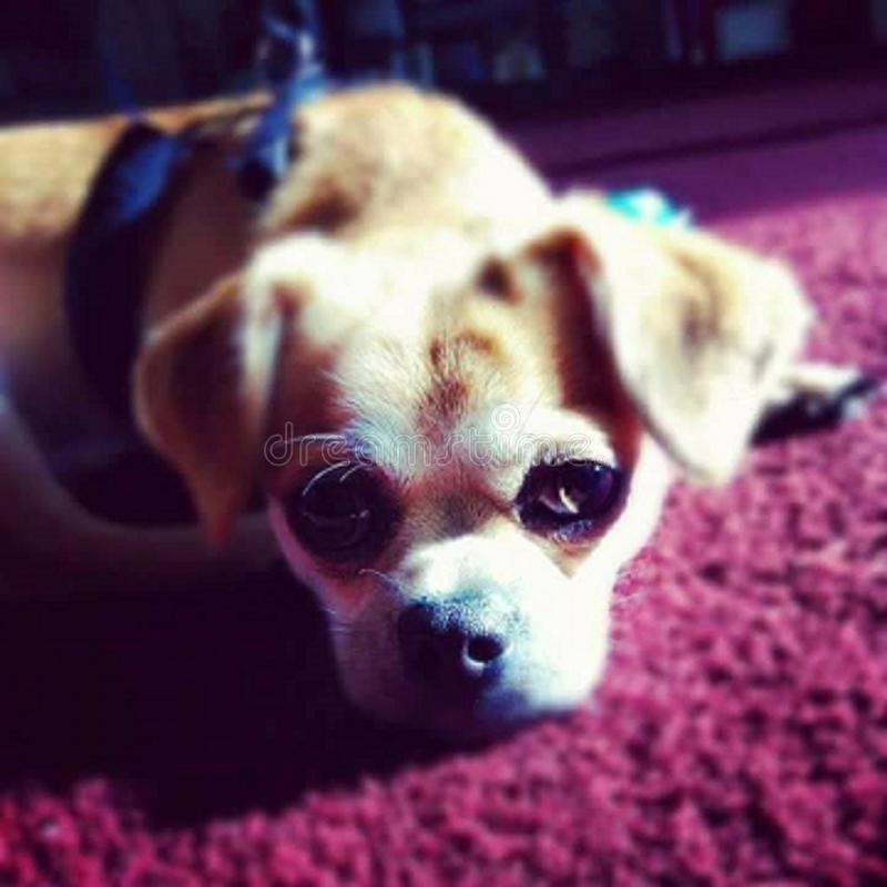 O cão o mais bonito imagem de stock royalty free