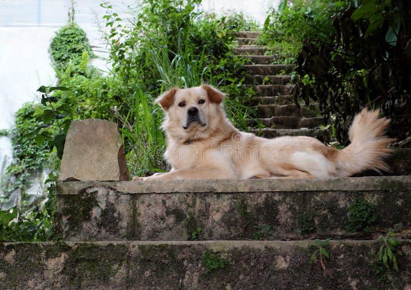 O cão masculino do cabelo longo branco coloca na casa do relógio da etapa imagens de stock