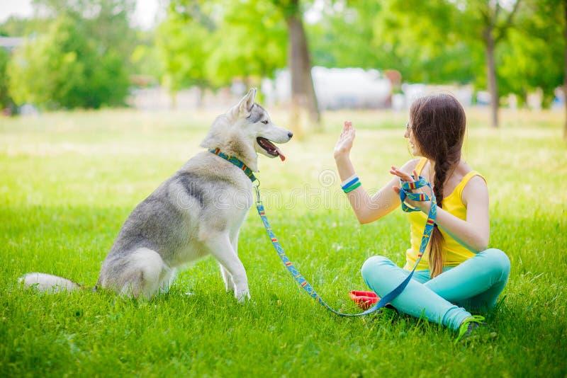 O cão misturado da raça dá a uma mulher a pata o cão de puxar trenós siberian foto de stock
