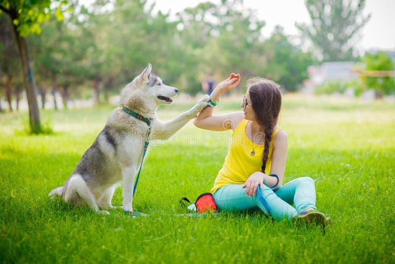 O cão misturado da raça dá a uma mulher a pata o cão de puxar trenós siberian fotos de stock