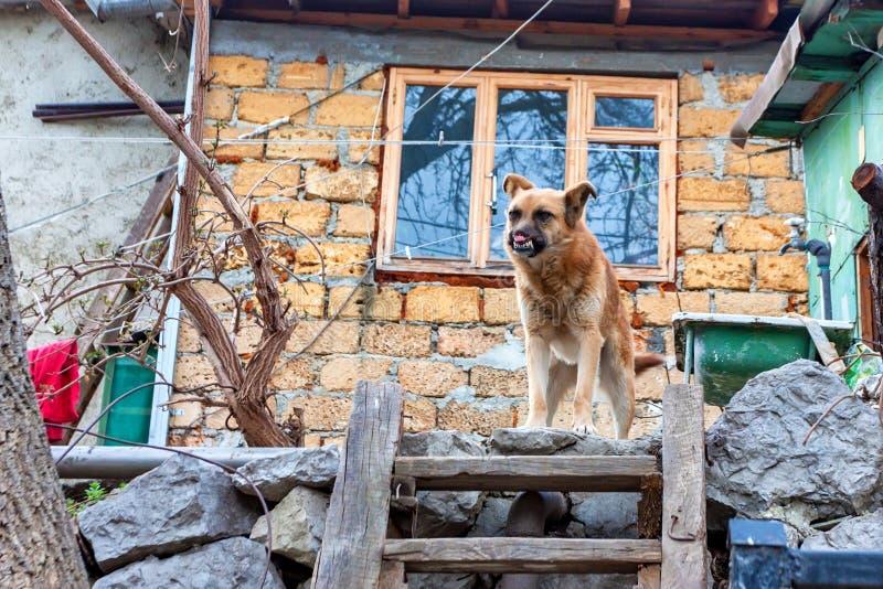 O cão mutilado está na parede de pedra fora foto de stock