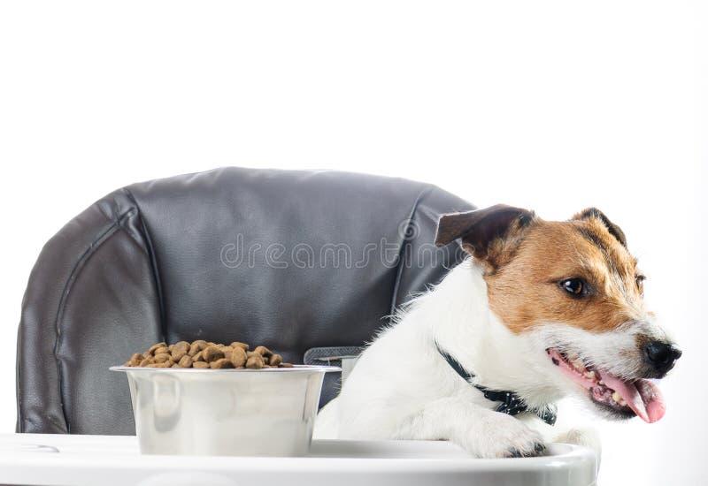 O cão não gosta do alimento na bacia e da recusa comer imagens de stock