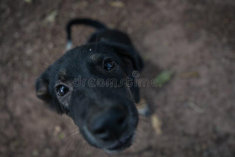 O cão no templo fotografia de stock royalty free