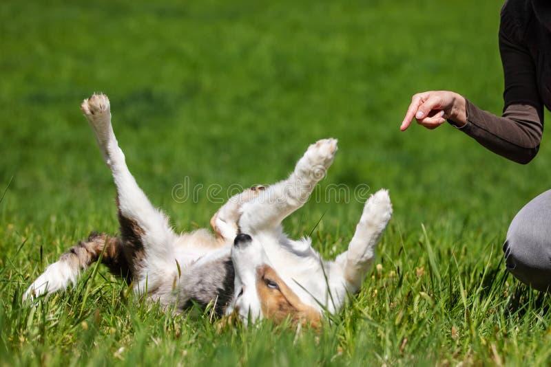 O cão novo weltering no prado, mulher está apontando, learnin fotografia de stock royalty free