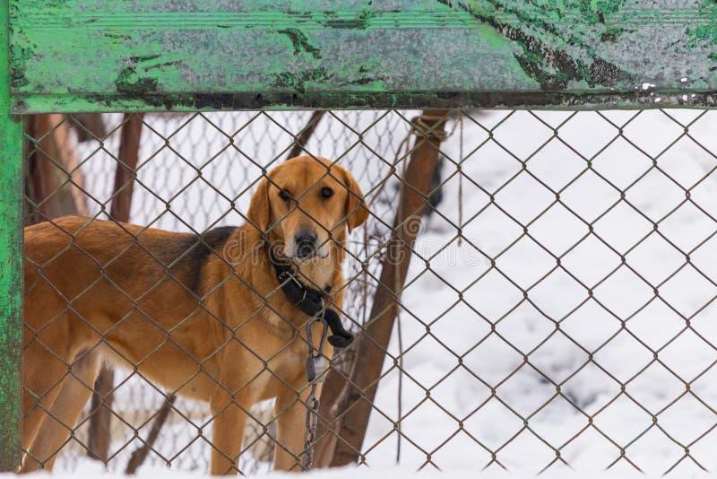 O cão olha para fora atrás da cerca foto de stock