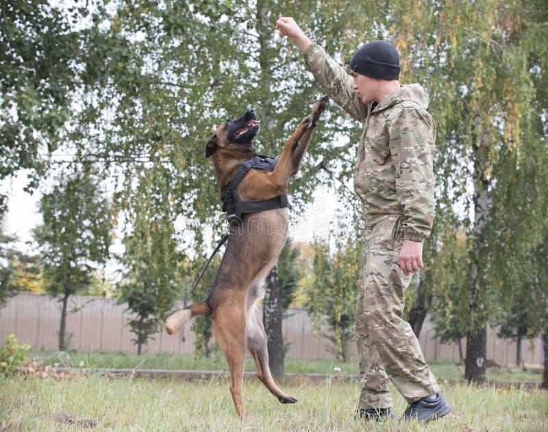 O cão-pastor alemão treinado grande salta acima pelo comando do instrutor foto de stock royalty free