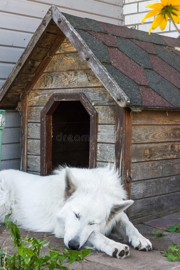 O cão-pastor suíço está sentando-se perto da cabine foto de stock royalty free