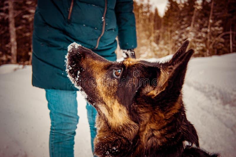 O cão pede uma bola de neve imagem de stock