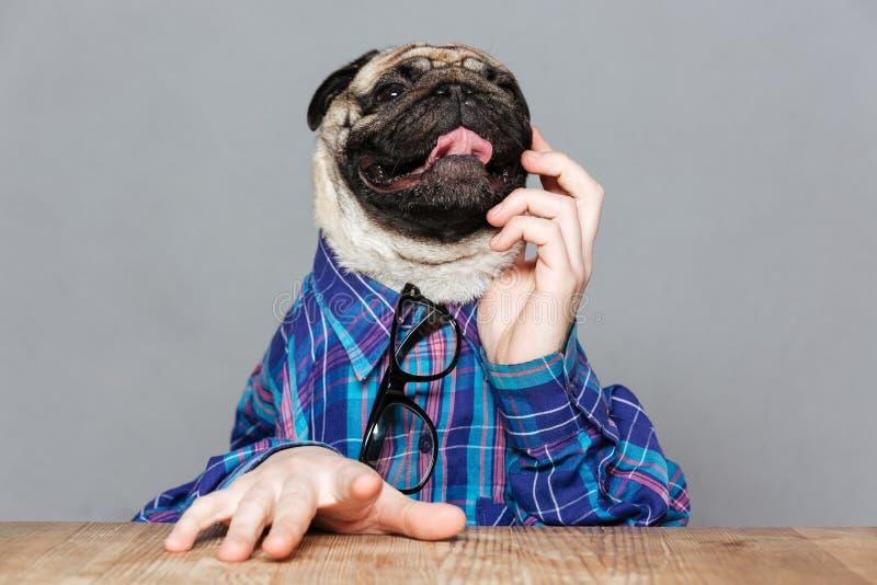 O cão pensativo do pug com homem entrega o assento e o pensamento foto de stock