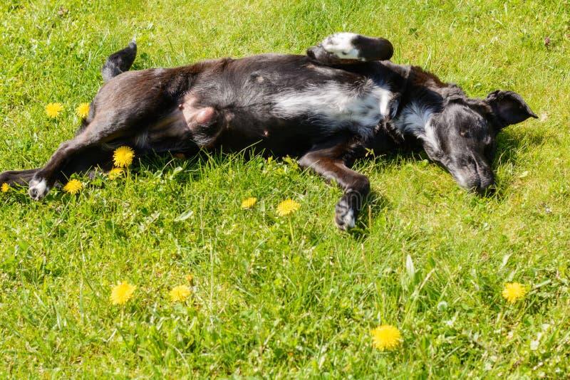 O cão preto aprecia-o no prado imagens de stock royalty free