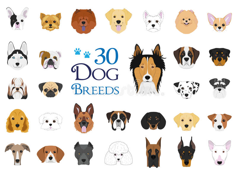 O cão produz a coleção do vetor: Grupo de 30 raças diferentes do cão ilustração do vetor