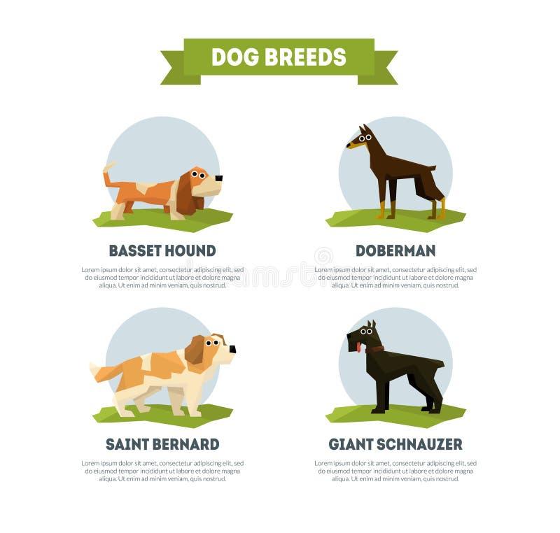 O cão produz o molde da bandeira, Basset Hound, Doberman, St Bernard, ilustração do vetor do Schnauzer gigante ilustração royalty free