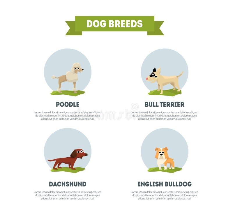 O cão produz o molde da bandeira, caniche, bassê, bull terrier, inglês, ilustração do vetor do buldogue ilustração stock