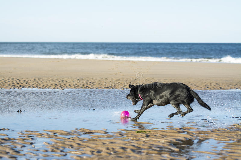 O cão que salta para buscar a bola imagem de stock royalty free