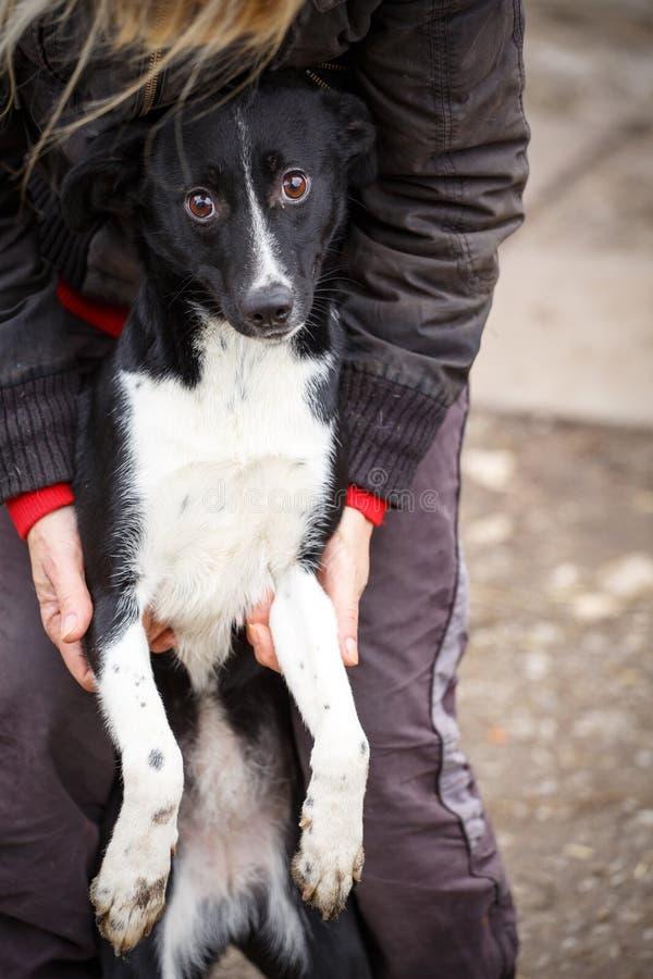 O cão redheaded infeliz Cão da rua nas mãos de uma mulher foto de stock royalty free