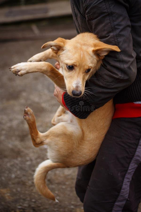 O cão redheaded infeliz Cão da rua nas mãos de uma mulher fotos de stock royalty free