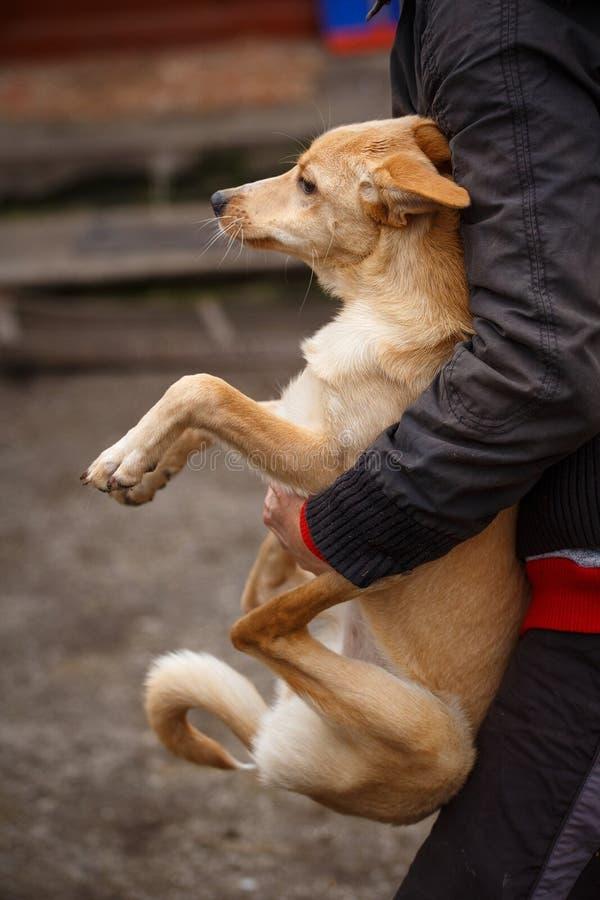O cão redheaded infeliz Os povos ajudam animais desabrigados fotos de stock royalty free