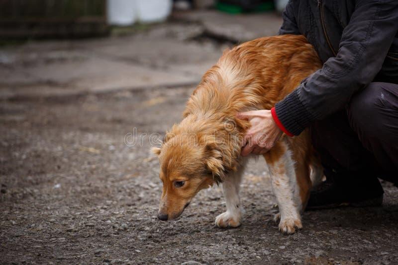 O cão redheaded infeliz Os povos ajudam animais desabrigados foto de stock royalty free