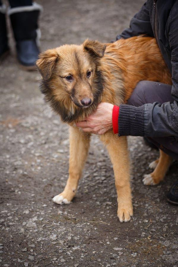 O cão redheaded infeliz Os povos ajudam animais desabrigados fotos de stock