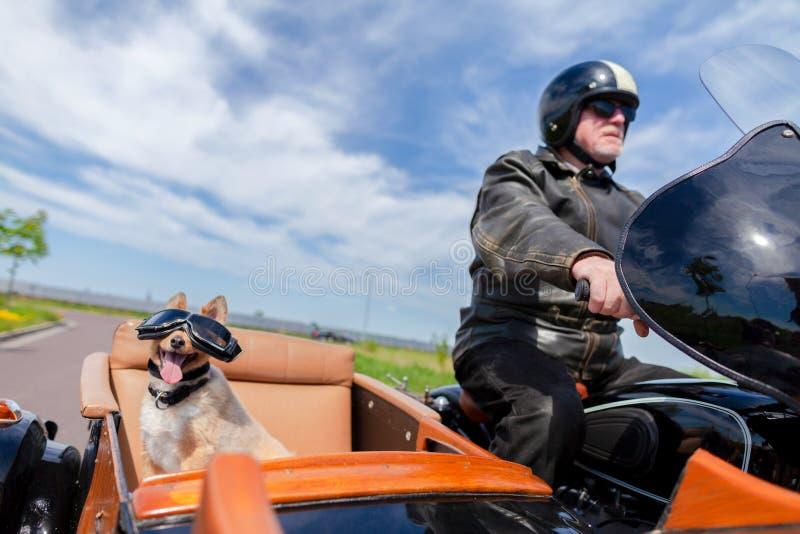 O cão senta-se com óculos de sol em um side-car da motocicleta imagens de stock royalty free