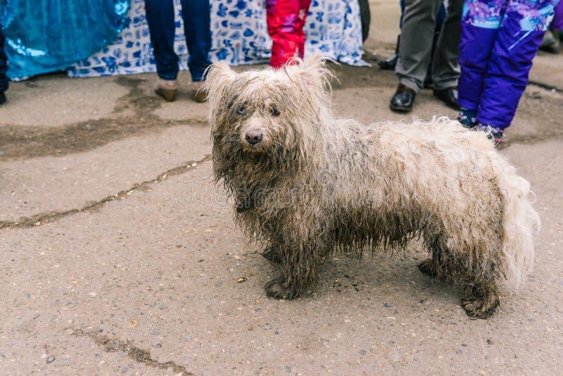 O cão sujo olha miserável O cão branco está procurando proprietários Animal disperso na rua foto de stock