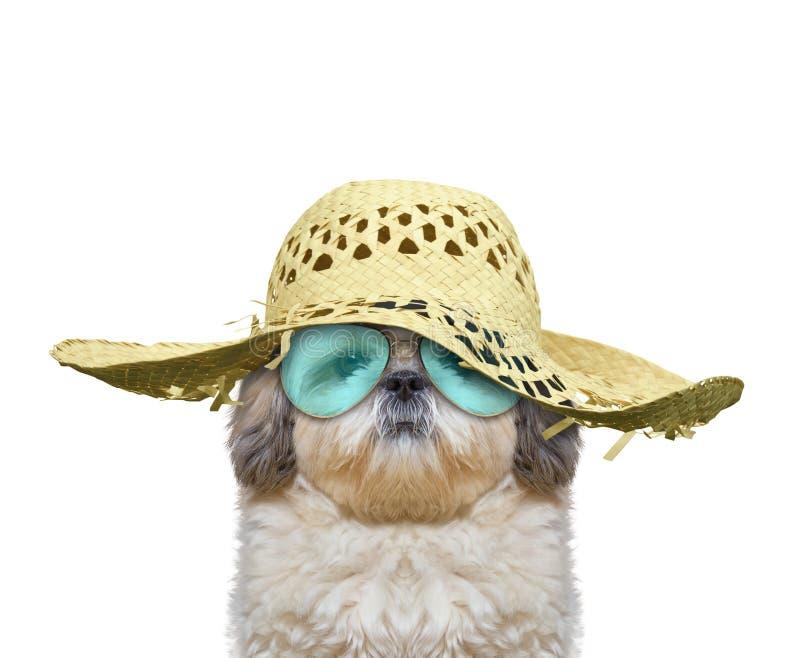 O cão tem um resto nas férias de verão imagem de stock