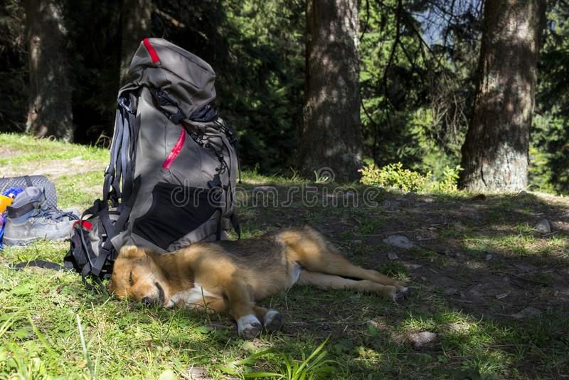 O cão vermelho encontra-se perto da trouxa nas montanhas, o cachorrinho do turista imagem de stock