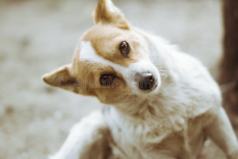 O cão vermelho engraçado olha no quadro imagens de stock royalty free
