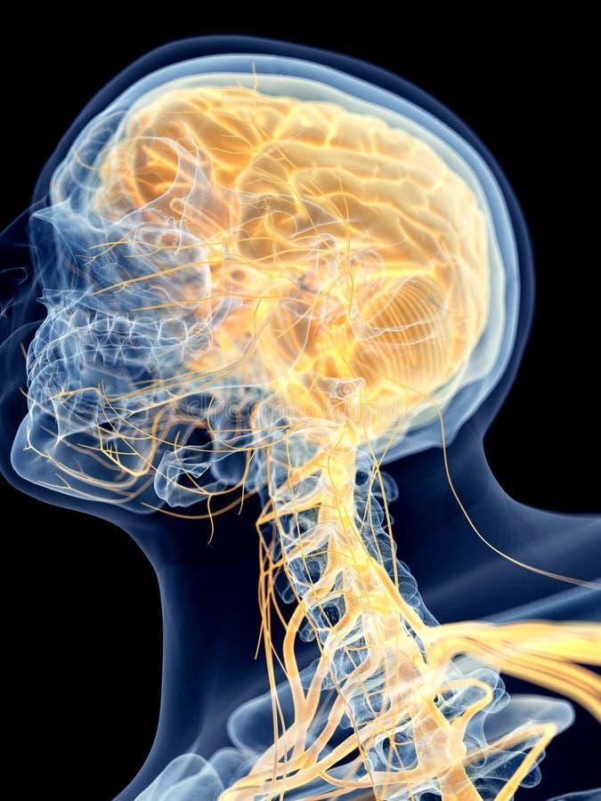 O cérebro ilustração stock