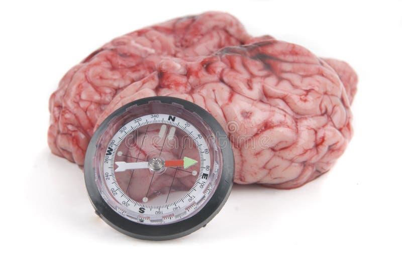 O cérebro de Alzheimer ou de Parkinson perdeu o desori norte fotos de stock