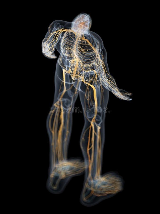 O cérebro e o sistema nervoso ilustração stock