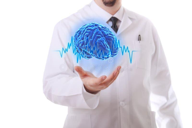 O cérebro humano imagens de stock