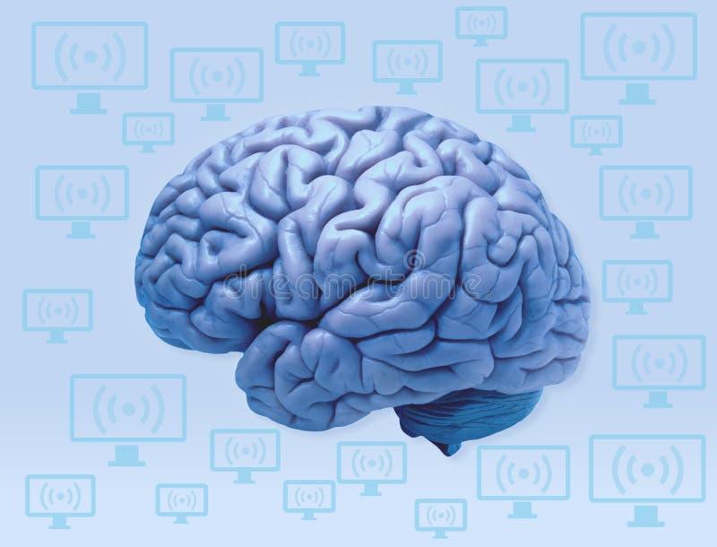 O cérebro humano e os computadores conectam fotografia de stock