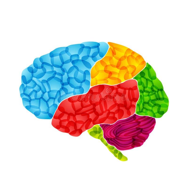 O cérebro humano, vector o fundo abstrato ilustração royalty free