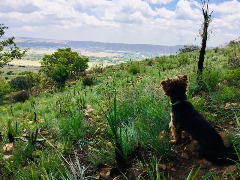 O céu é o rei do awesomeness Um cão sonha para ser uma nuvem imagens de stock