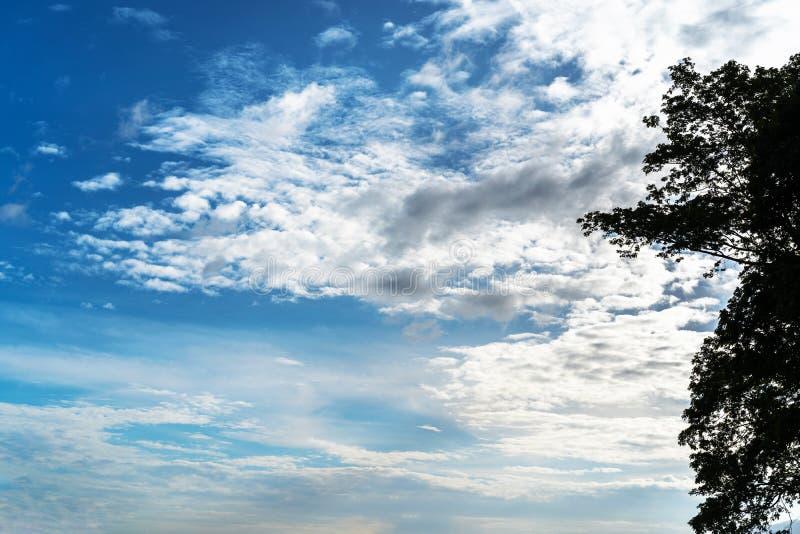 O céu azul abstrato e o branco poderiam para o fundo com árvore escura foto de stock