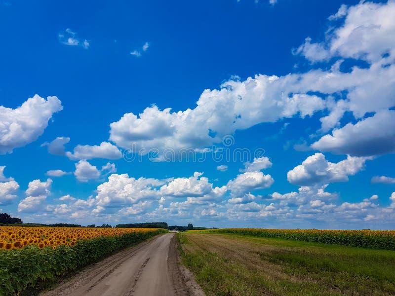 O céu azul com cloudscape vívido da cor das nuvens do branco e o girassol colocam a paisagem foto de stock royalty free