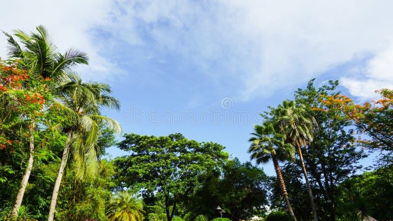 O céu azul com nuvens alinhou com árvores, verdes e folhas de coco com espaço para a cópia fotografia de stock royalty free